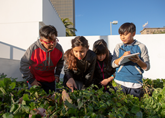 A group of students looking through plants in a garden