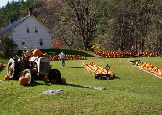 A farm with pumpkins